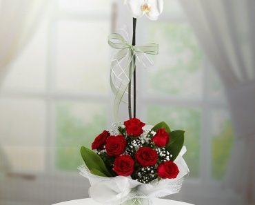 orkide-gulleri